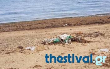 Κλαδιά και σκουπίδια σε παραλία της Χαλκιδικής