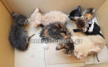 Πέταξαν στα σκουπίδια έξι γατάκια στη Λαμία