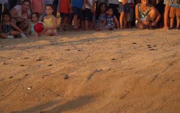Νεογέννητες καρέτα καρέτα κολυμπούν στη Μεσόγειο εν μέσω χειροκροτημάτων