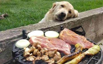 Αν έχεις για κατοικίδιο σκύλο τότε ξέρεις