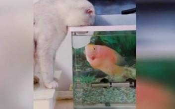 Ψάρι παίζει με τη γάτα
