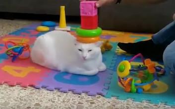 Καταστάσεις που δημιουργούν μόνο οι γάτες