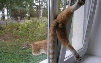 Γάτες εν δράσει