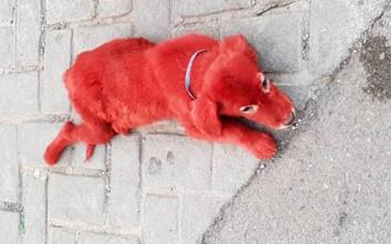 Ασυνείδητοι έβαψαν κόκκινο ένα κουτάβι στη Χαλκίδα