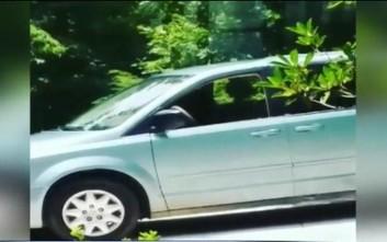 Άφησε το παράθυρο του αυτοκινήτου ανοιχτό κι όταν γύρισε την περίμενε μια έκπληξη