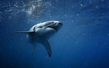 Νεκρός τουρίστας από επίθεση καρχαρία στην Ερυθρά Θάλασσα