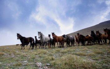 Τα άγρια άλογα του Ολύμπου