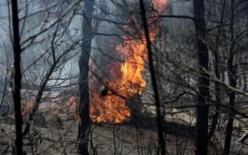 Σε εξέλιξη φωτιά σε δασική περιοχή στη Λευκίμη Αλεξανδρούπολης