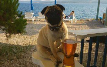 Σκυλίσια ζωή σε beach bar στην Κροατία
