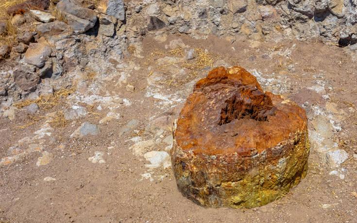 Το σπάνιο φαινόμενο της φύσης στο Απολιθωμένο Δάσος της Λέσβου