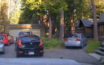Πεινασμένη αρκούδα εγκλωβίστηκε σε αυτοκίνητο, ψάχνοντας για φαγητό