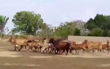 Εισβολή ζώων διέκοψε ματς στη Βραζιλία