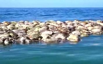Εκατόμβη θαλασσίων χελωνών που κινδυνεύουν με εξαφάνιση στο Μεξικό