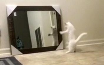 Γάτα βλέπει τον εαυτό της στον καθρέφτη και... φρικάρει