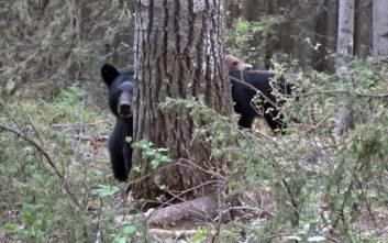 Η ιδέα να βιντεοσκοπήσει τη μαμά αρκούδα αποδείχθηκε άκρως επικίνδυνη