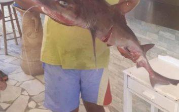 Έπιασε καρχαρία κοντά στη Γαύδο