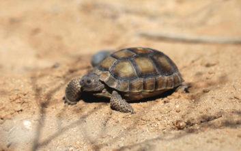 Φλώρινα: Δηλητηρίασαν σκυλιά, κουνάβια, σκαντζόχοιρους και χελωνάκια