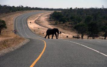 Σφαγή ελεφάντων από λαθροκυνηγούς στη Μποτσουάνα