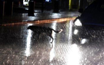Διακοπές ρεύματος στην Πύλο, ισχυροί άνεμοι και έντονη βροχή