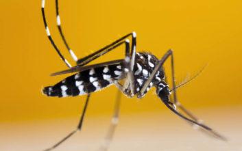 Κουνούπι «τίγρης», σαρώνει μέσα στη μέρα και αυξάνεται επικίνδυνα ο πληθυσμός του στην Ελλάδα