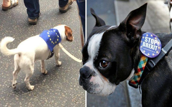 Τα σκυλιά της Βρετανίας… ξεσηκώνονται κατά του Brexit