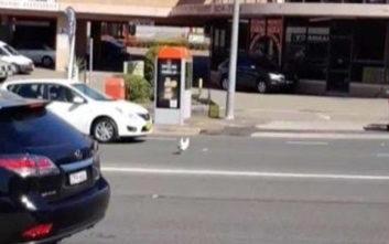 Κοτόπουλο διασχίζει λεωφόρο