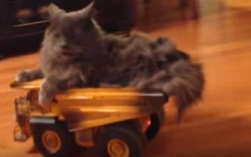 Καταστάσεις με τις οποίες θα ταυτιστούν όσοι έχουν γάτες