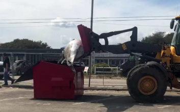 Προσπάθησαν να ρίξουν φάλαινα 2 τόνων σε… κάδο απορριμμάτων