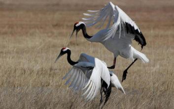 Ο επίμονος κι ακούραστος προστάτης των πουλιών της Κίνας