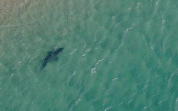 Τα «Σαγόνια του καρχαρία» έζησαν τουρίστες σε παραλία των ΗΠΑ