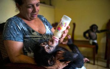 Τα κοινά που έχουν τα μωρά ανθρώπου και… χιμπαντζή