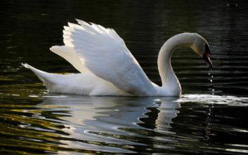 Γαλήνιες εικόνες από τη λίμνη Μπελέτσι