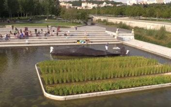 Φάλαινα εμφανίστηκε σε… τεχνητή λιμνούλα της Μαδρίτης