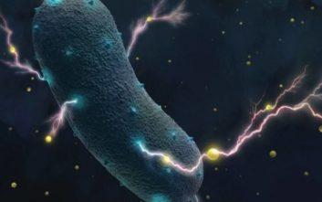 Το μυστικό των βακτηρίων του εντέρου