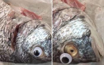 Έβαζαν ψεύτικα μάτια στα ψάρια για να μοιάζουν… φρεσκότατα