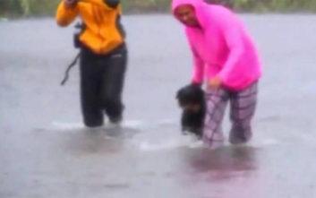 Ρεπόρτερ αφήνει τη ζωντανή σύνδεση για να σώσει ζωντανό από την πλημμύρα