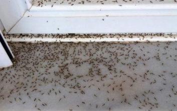 Πέπλα αράχνης και κουνούπια μέσα στα σπίτια στο Αιτωλικό