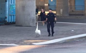 Αυτή τη φορά το έργο της αστυνομίας ήταν όσο πιο περίεργο γινόταν
