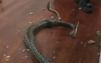Το ταβάνι της κρεβατοκάμαρας άνοιξε, δύο… φίδια έπεσαν στο δωμάτιο