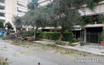 Δέντρο ξεριζώθηκε και έπεσε πάνω σε αυτοκίνητα και καλώδια στο Μαρούσι