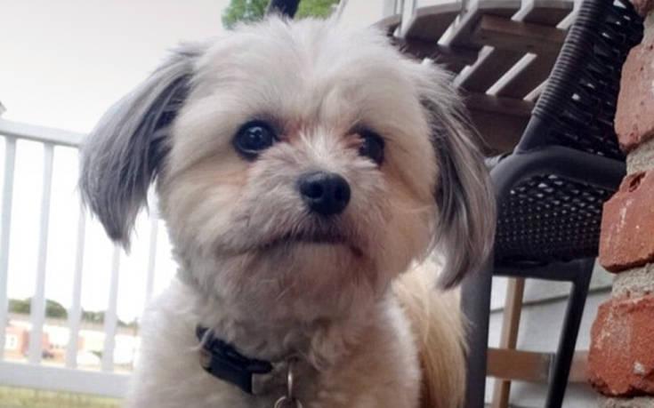 Σκυλίτσα κλέβει τη μασέλα του ιδιοκτήτη, αποκτά το πιο αστείο χαμόγελο που έχετε δει