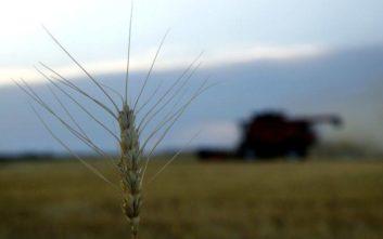 Ένα νανοστοιχείο για τον έλεγχο της καλλιέργειας σιταριού πριν τη συγκομιδή