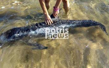 Το δελφίνι αρνούνταν να επιστρέψει στα βαθιά