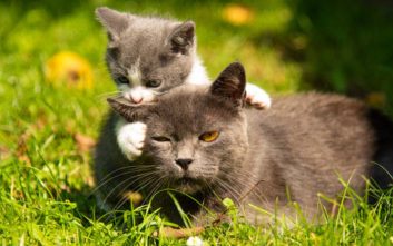 Δύο γάτες έσωσαν ζευγάρι από κατολίσθηση