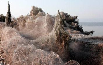Εντυπωσιακές εικόνες από το πέπλο αράχνης στη Βιστωνίδα