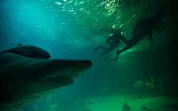 Γυμνιστής σέρφερ γλίτωσε τη ζωή του ρίχνοντας… κουτουλιές σε καρχαρία
