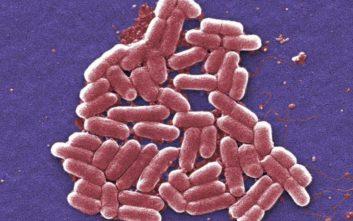 Δύο νεκρά παιδιά από το βακτήριο E coli στην Αγγλία
