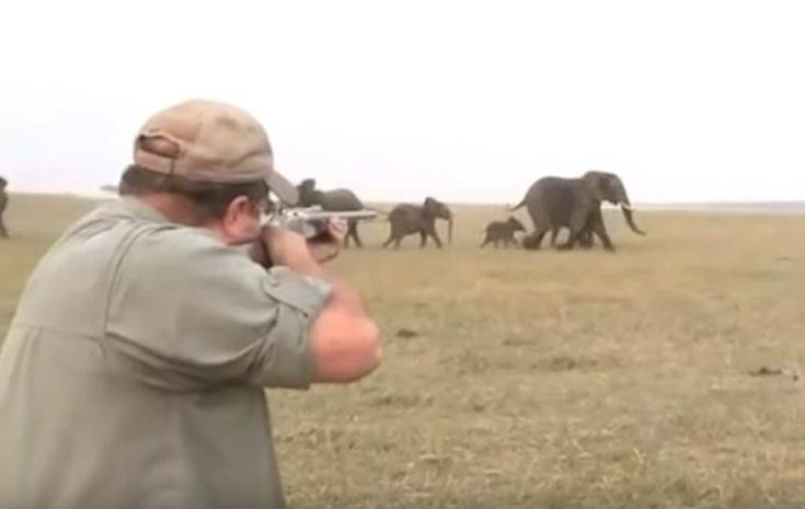 Σκότωσαν ελέφαντα και η υπόλοιπη αγέλη τους έτρεψε σε φυγή
