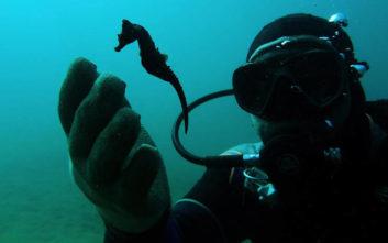 Δίχτυα-φαντάσματα απειλούν ύφαλο με ιππόκαμπους στη Χαλκιδική