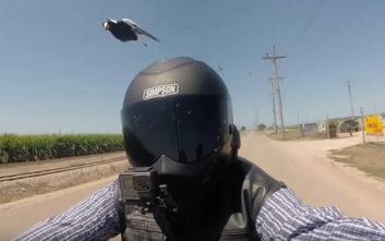 Αναβάτης μοτοσικλέτας δέχεται επίθεση από... καρακάξες